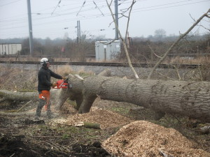 tree cutting process at the stage of clearance