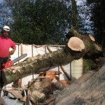 Forest Management & Tree Clearance form regular services for our commercial clients
