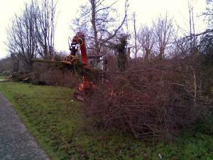 Vegetation Removal