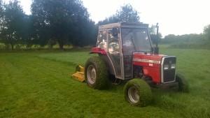 1 grass cutting (8)