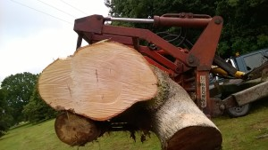 tree maintainence