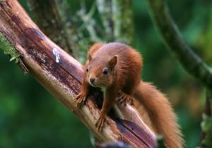 Ecology and Habitat Mitigation