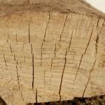 seasoned-firewood